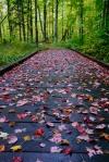 Fall Trail - Madeline Island Wilderness Preserve, WI