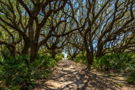The Beach Road - Cumberland Island
