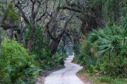 The Main Road to Dungeness - Cumberland Island, GA