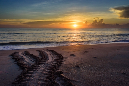 Natural Patterns - Indian Harbour Beach, FL