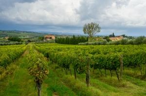 Poliziano Winery - Montepulciano, Italy